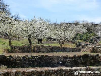 Cerezos en flor en el Valle del Jerte - Bancales cerezos;barranquismo pueblos con encanto pueblos de